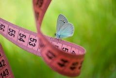 桃红色颜色,对此一只蓝色蝴蝶,接近的看法测量的磁带坐被弄脏的背景 库存照片