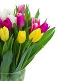 桃红色,紫色和白色郁金香花束  免版税库存照片