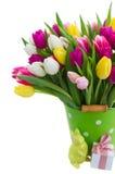 桃红色,紫色和白色郁金香花束  库存照片
