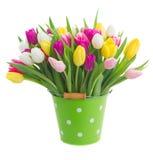 桃红色,紫色和白色郁金香花束  免版税库存图片