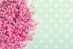 桃红色婴孩的花花束  库存图片
