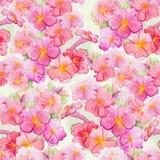桃红色水彩花无缝的样式 库存照片