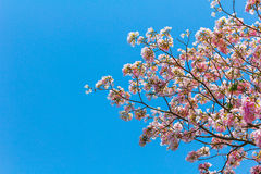 桃红色结构树喇叭 免版税库存图片