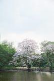 桃红色结构树喇叭 库存图片