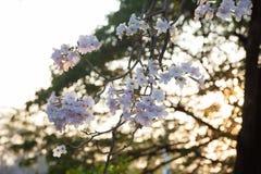 桃红色结构树喇叭 库存照片