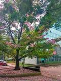 桃红色结构树 免版税库存图片