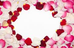 桃红色 瓣红色玫瑰白色 华伦泰` s日背景 平的位置,顶视图 免版税库存照片