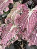 桃红色&白色用花装饰 免版税图库摄影