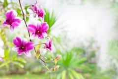 桃红色紫色兰花花花束在有拷贝空间的绿色公园 库存图片
