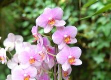 桃红色紫色兰花 免版税库存图片