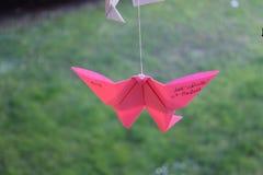 桃红色蝴蝶 库存照片
