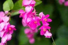 桃红色flower& x27; 与叶子的s分支在庭院里 库存照片