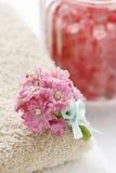 桃红色kalanchoe blossfeldiana美丽的微小的花束开花 免版税库存图片