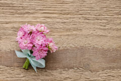 桃红色kalanchoe blossfeldiana美丽的微小的花束开花o 库存照片