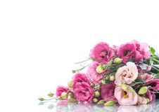 桃红色lisianthus花美丽的花束  库存照片