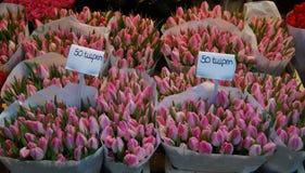 桃红色tullips在荷兰 免版税库存照片