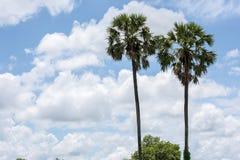 桄榔、云彩和天空在背景中 免版税库存图片