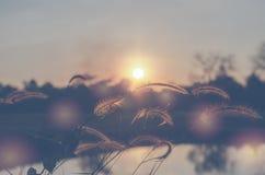 桄榔阳光领域在晚上 图库摄影
