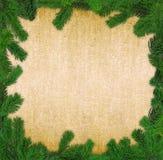框架云杉的方形枝杈 免版税图库摄影