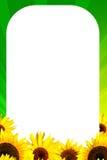 框架向日葵黄色 库存照片