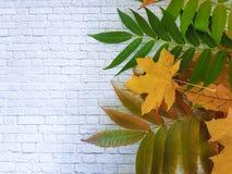 框架在一个白色砖墙上的аutumn事假 库存图片