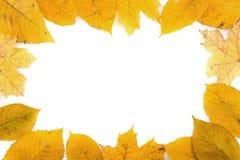 框架在白色backg隔绝的组成由五颜六色的秋叶 图库摄影