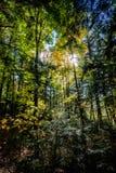 框架在秋天填装了森林 免版税图库摄影