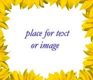 框架您向日葵的文本 免版税库存图片