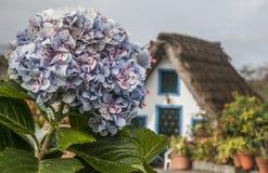 框架房子和一朵大花,桑塔纳,马德拉岛 免版税图库摄影
