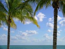 框架棕榈树 免版税库存图片