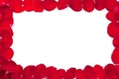 框架瓣红色上升了 免版税库存图片