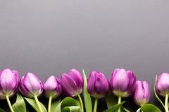 框架由五颜六色的紫色郁金香做成在黑暗的背景 顶视图,您的文本的拷贝空间 库存图片