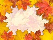框架由明亮的槭树叶子制成 大小4Ð¥3 免版税库存图片
