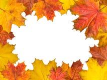 框架由明亮的槭树叶子制成 大小4Ð¥3 免版税库存照片