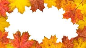 框架由明亮的槭树叶子制成 大小16Ð¥9 免版税图库摄影