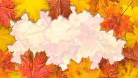 框架由明亮的槭树叶子制成 大小16Ð¥9 库存图片