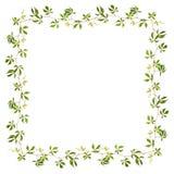 框架由有绿色叶子的爬山虎属枝杈制成 免版税库存照片