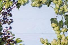 框架由狂放的葡萄和新鲜的绿色蛇麻草做成 库存图片