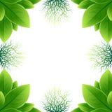 框架由绿色叶子和根做成 免版税库存照片
