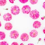 框架由紫色玫瑰和瓣制成在白色背景 平的位置,顶视图 桃红色花的花卉圆的构成 库存图片
