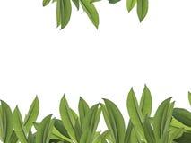 框架的绿色叶子与裁减路线 免版税库存照片