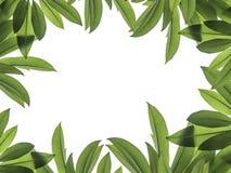 框架的绿色叶子 免版税图库摄影