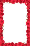 框架红色玫瑰 库存图片