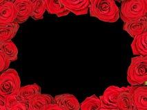 框架红色玫瑰 库存照片
