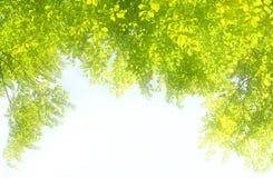 框架绿色叶子做 免版税库存图片