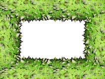 框架绿色棘手的树干 库存图片