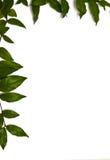 框架绿色留下左顶层 免版税图库摄影