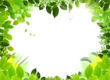 框架自然模板 免版税图库摄影