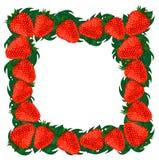 框架草莓 免版税图库摄影