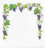 框架葡萄水彩 库存照片